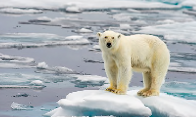 This Global Warming Quiz Will Shock You!