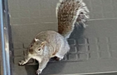 Squirrels take over as Barrington continues remote-learning
